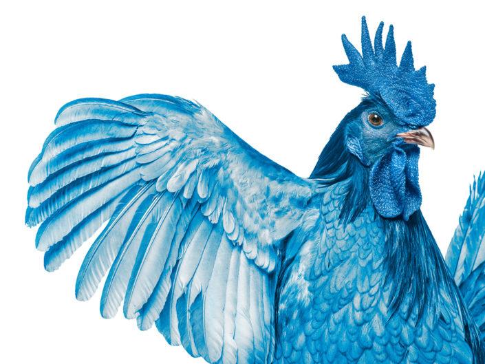 Highmark Blue Hen