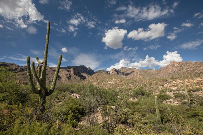arizona landscape, tucson arizona, finger rock trail, cactus landscape