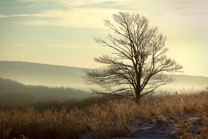 Vermont landscape, rural landscape, landscape with tree, landscape photography